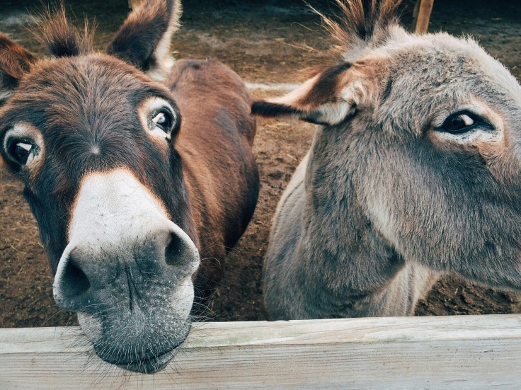 2-brown-and-grey-donkey-closeup-photography-208821